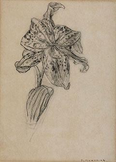 Mondriaan P.C. - Lelie, houtskool op papier 25,9 x 19 cm , gesigneerd r.o. en te dateren ca. 1905-1906