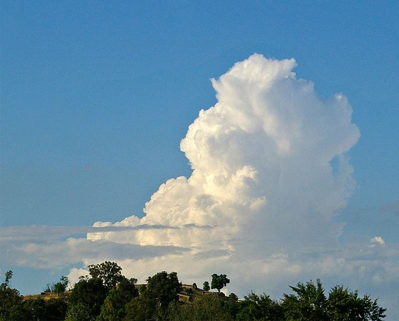 Cumulus congestus